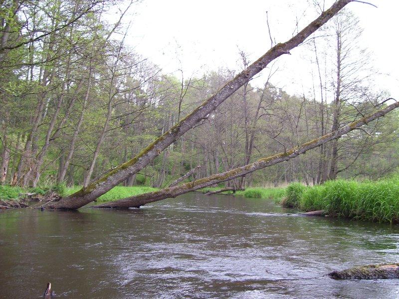 Spływy kajakowe Dobrzyca