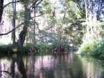 Spływy kajakowe Głomia